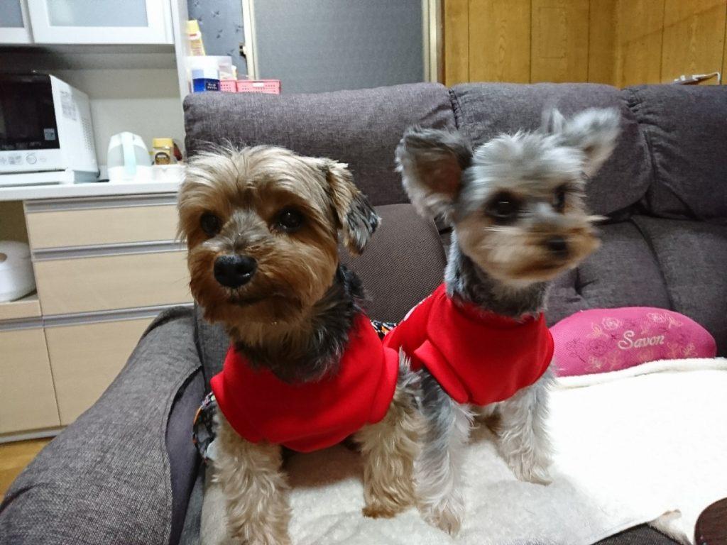 愛犬モコ&ココがベランダからお出迎えだワン!